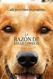 La Razón de estar Contigo / A Dog's Purpose