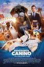 Superagente canino / Show Dogs