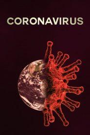 Coronavirus Como Comenzo Todo